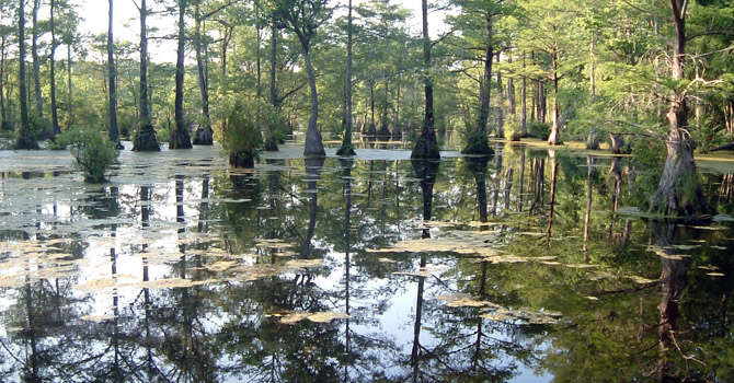 Blackwater swamp area in North Carolina